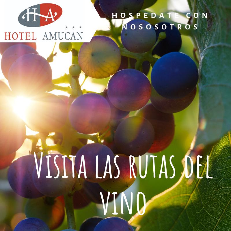 Visita las rutas del vino